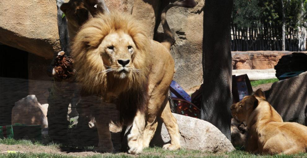 Звіряча урбаністика: зоопарки сьогодні і завтра